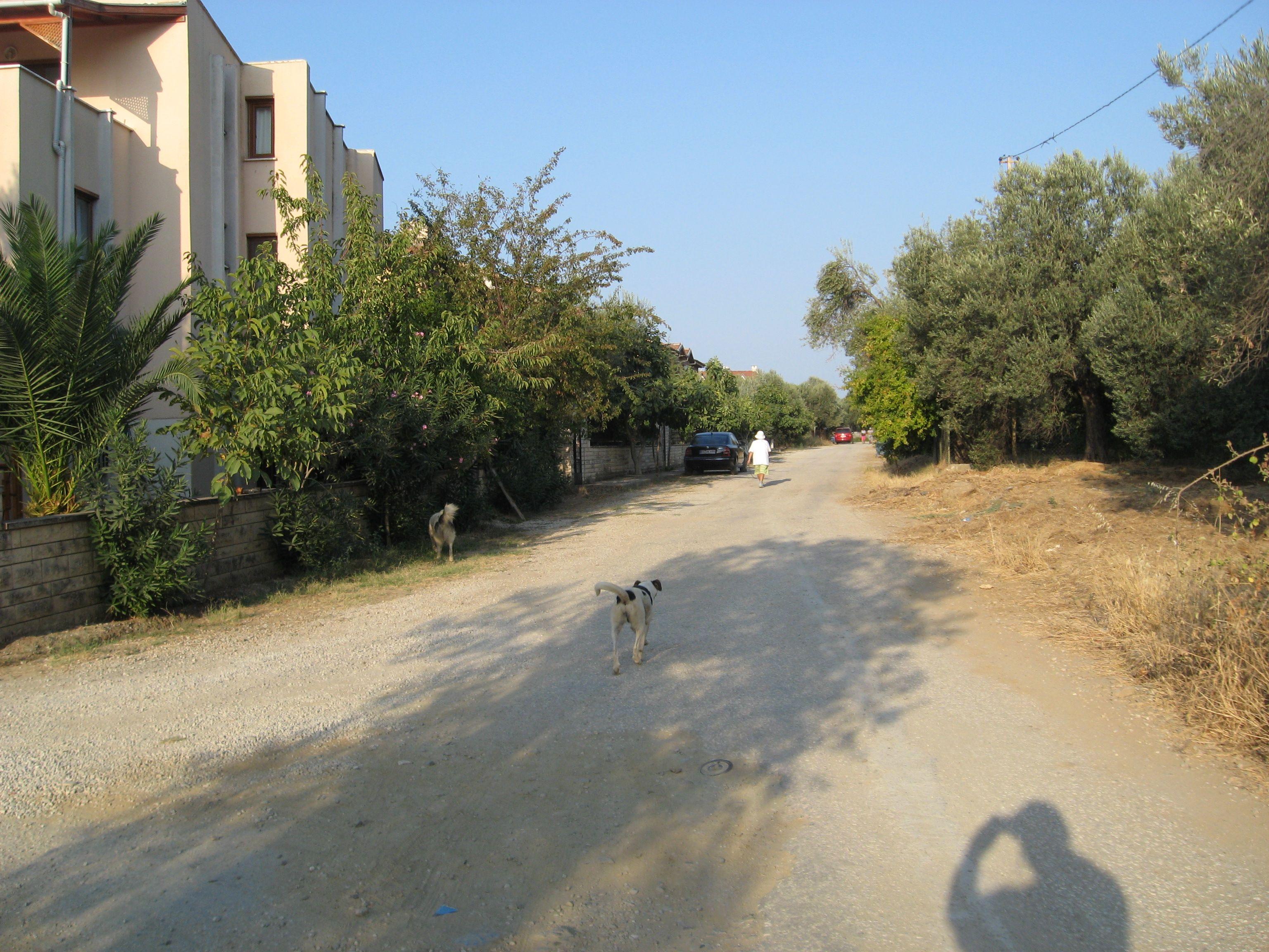 ALTINOLUK YÜRÜYÜŞLERİMİZ / KOCA DERE TURU